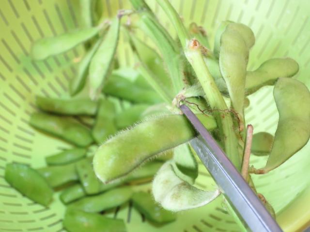 枝豆を切る