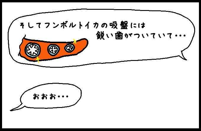 フンボルトイカ5