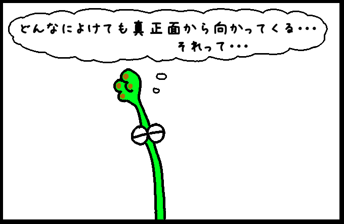マッコウクジラ10