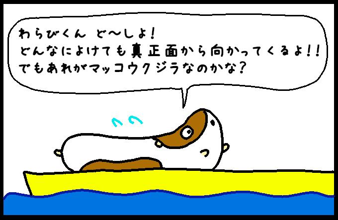マッコウクジラ9