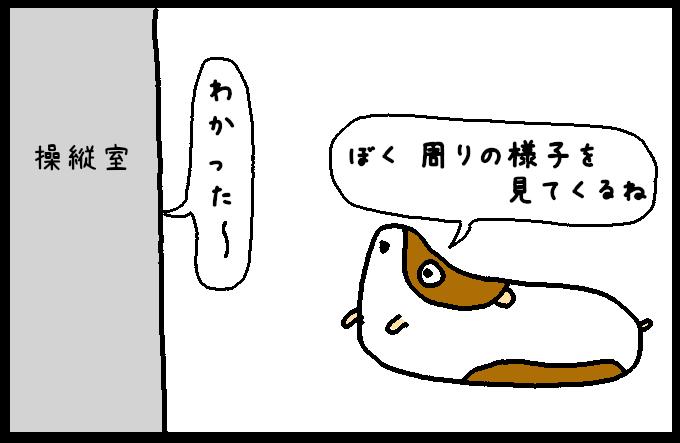フンボルトイカ2-3