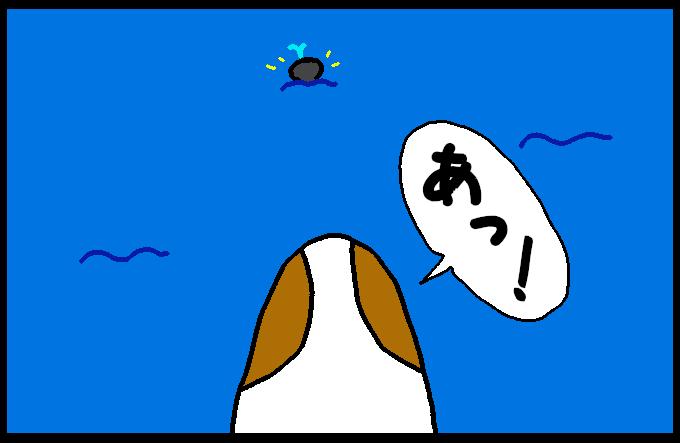 マッコウクジラ4