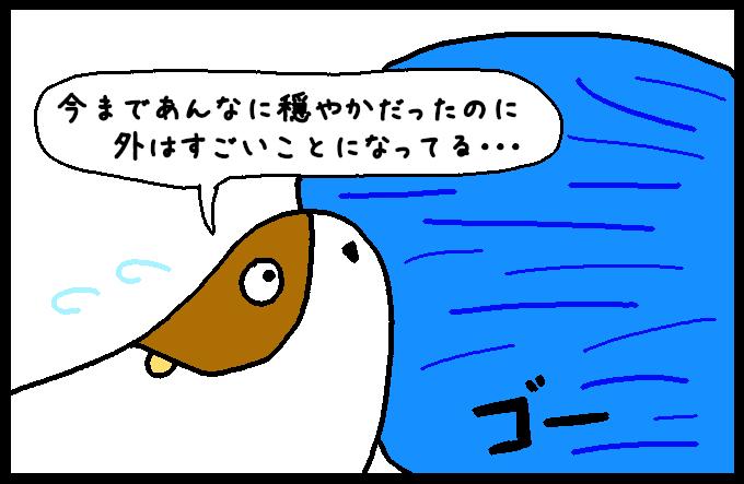 フンボルトイカ3-6