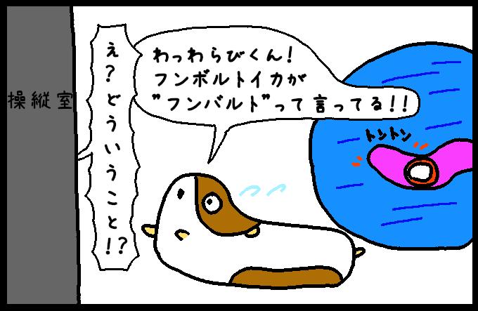フンボルトイカ3-10