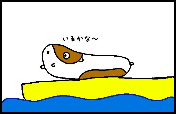 マッコウクジラ3