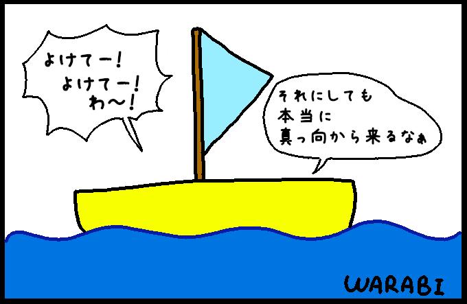 マッコウクジラ13